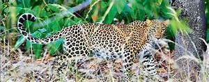 Pench National Park  A Trip Into The Animal Kingdom