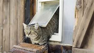 Katzenklappe Für Fenster : katzenklappe isoliert test vergleich 2020 ~ A.2002-acura-tl-radio.info Haus und Dekorationen