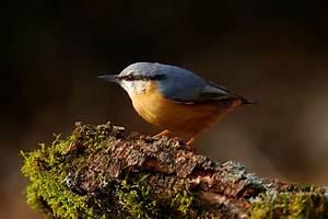 Le Fond de Noye Ligue Royale Belge pour la Protection des Oiseaux