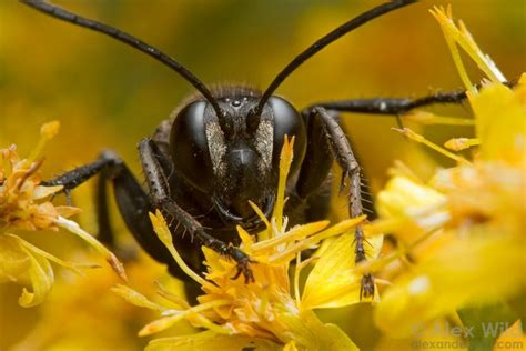 insect photography tips     lens