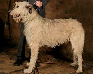 Irish Wolfhounds - Index