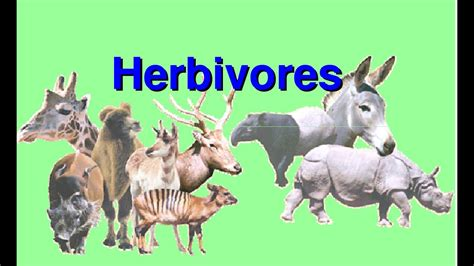 What are Herbivores Video for Kids YouTube