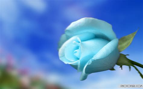 light blue flower wallpaper  wallpapersafari