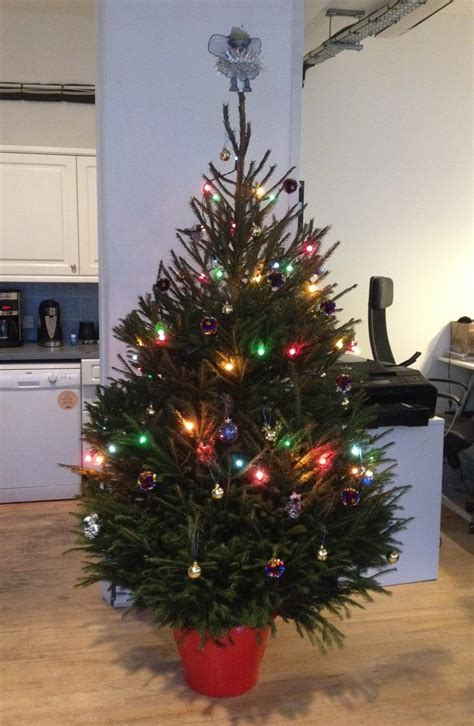 real christmas trees delivered  creekside christmas