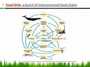 Ap Biology Community Ecology