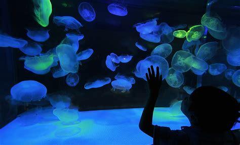 portland aquarium owners   foster children