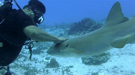 Cozumel Dive Cozumel Scuba Diving