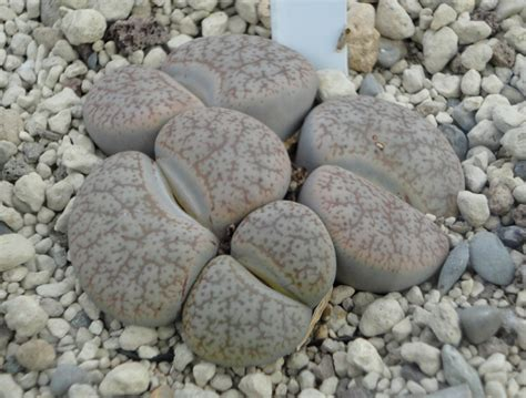 steine zum bemalen kaufen steine zum bemalen kaufen pens stones ulrike hirsch
