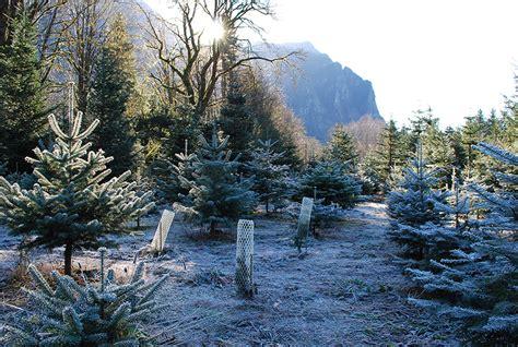 mountain creek christmas tree farm seattle recreation