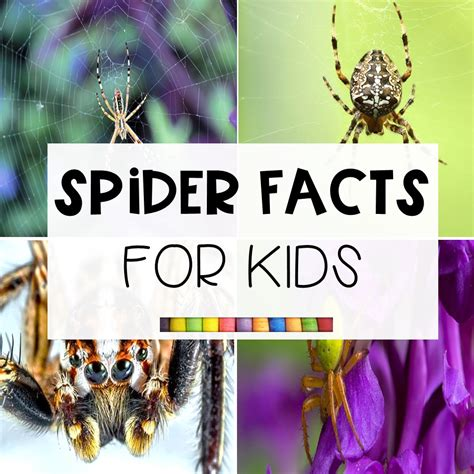 fun spider facts  kids  learning corner