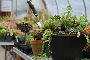 Pflanzen Im Schatten : die besten pflanzen f r garten im schatten ~ Orissabook.com Haus und Dekorationen