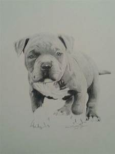 Baby pitbull, drawing by Reco Washington | Art - Drawings ...