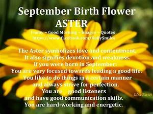 "21 best September Birth Flower ""Aster"" images on Pinterest ..."