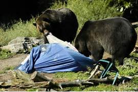 Antique Bear Attack Sleeping Bag Pict Bears Who Wear A Necktie And Hat Are Interested In Stealing Picnic