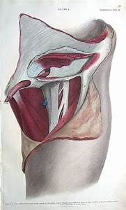 Surgical Anatomy Of Inguinal  U0026 Femoral Hernia Repair