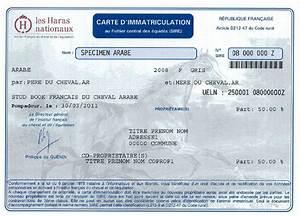 Carte Grise Prix Du Cheval 2016 : vetitude europe identification des chevaux des r gles durcies en 2016 ~ Medecine-chirurgie-esthetiques.com Avis de Voitures