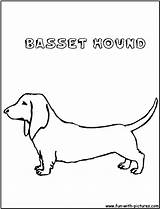 Hound Basset Coloring Template Pages Bassethound sketch template