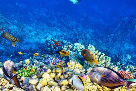umbul ponggok wisata foto serasa  dasar laut