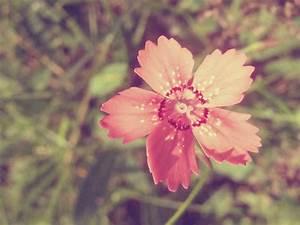 Weinlese Rosa Blumen Hintergrundbild Hintergrundbilder