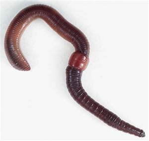 YKSD Biology Chapter 3 Lesson 3 Invertebrates