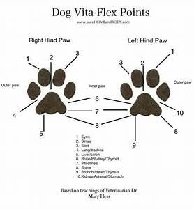 Flex Points Berechnen : dog vita flex points young living essential oils ~ Themetempest.com Abrechnung