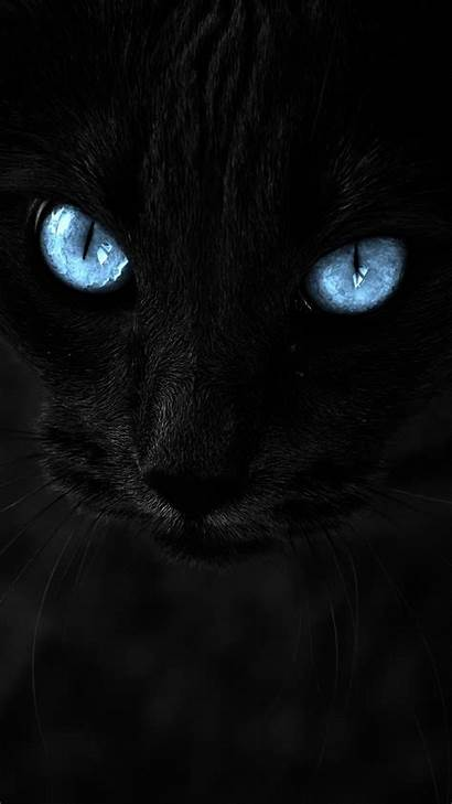Cat Cats Eyes Close Wallpapers Ojos Azules