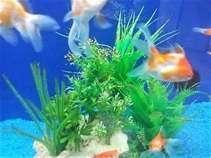 Fische Für Anfänger : aquarium fische f r anf nger welche arten sie als einsteiger kaufen sollten teil 1 ~ Orissabook.com Haus und Dekorationen
