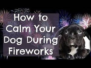 17 best ideas about Dog Scared Of Fireworks on Pinterest ...