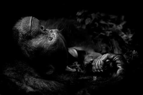 award winning wildlife animal photography examples