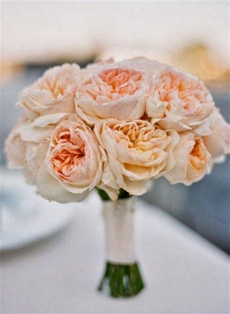 25 Best Ideas About Juliet Garden Rose On Pinterest