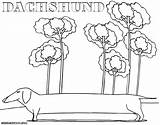 Dachshund Coloring Pages Dog Colorings sketch template