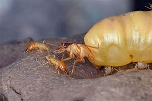 7 Things You May Not Know About Termites
