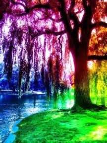 18 best images about rainbow trees on trees a tree and colors