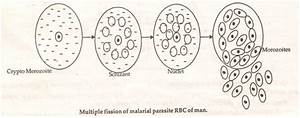 Cbse Class 12th Biology Notes  Reproduction In Organisms