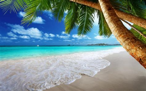 Tropical Paradise On Beach Wallpaper Nature And
