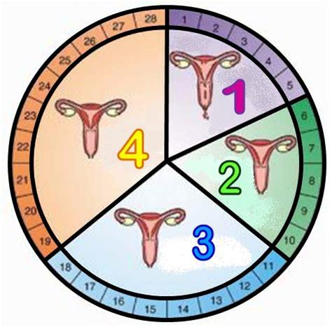 Rahim Wanita Yang Dalam Fahami 4 Fasa Kitaran Haid 5 Sebab Kenapa Wanita Kena