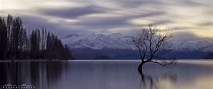 Lake Wanaka The Alone Tree New Zealand