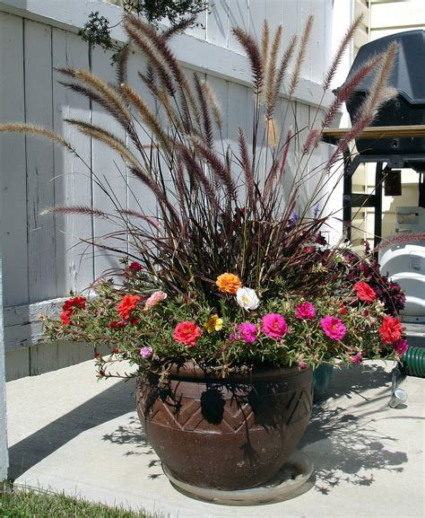 purple grass container ideas 8 water wise ornamental grasses ideas tips install it direct