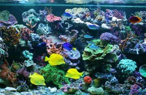 aquarium communautaire poissons tropicaux romainliv