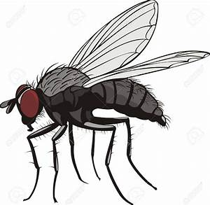 House fly clipart - Clipground