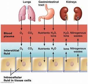 Chapter 18 Electrolytes  U0026 Fluids