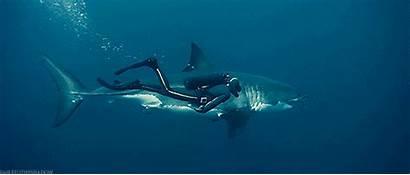 Disney Diver Nature Shark Movies Gifer Oceans