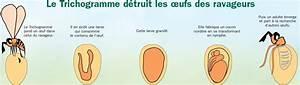 Mites Alimentaires Cycle De Reproduction : tricholine mites anti mites alimentaires bio et naturel ~ Dailycaller-alerts.com Idées de Décoration