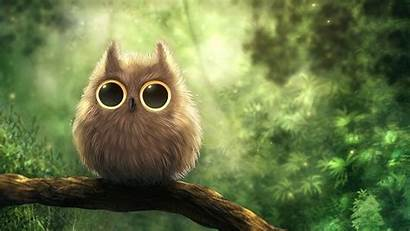 Owl Wallpapers Backgrounds Vector