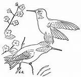 Hummingbird Coloring Pages Rufous Hummingbirds Drawing Bird Printable Birds Ruby Sheets Throated Swallow Sheet Tailed Colouring Flower Supercoloring Drawings Painting sketch template