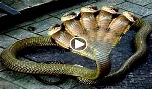 five headed snake, four........ - Blogsupermovie