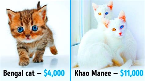 cats cost fortune awesome