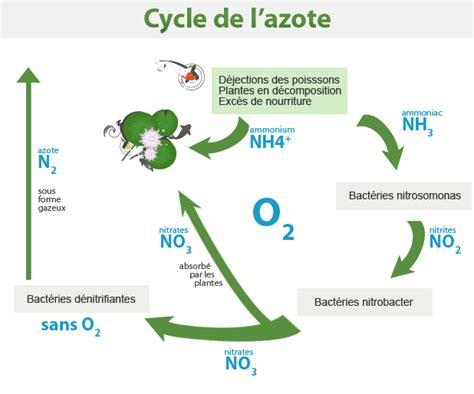 cycle de l azote bassin carpes ko 239 koi