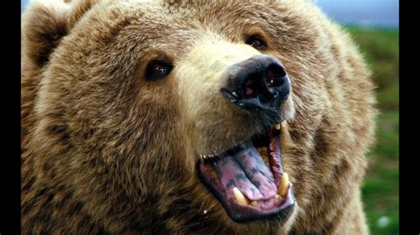 Животное Медведь описание его образ жизни и повадки