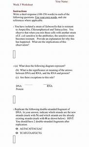 Solved  Your Name  Week 3 Worksheet Instructions Write A S